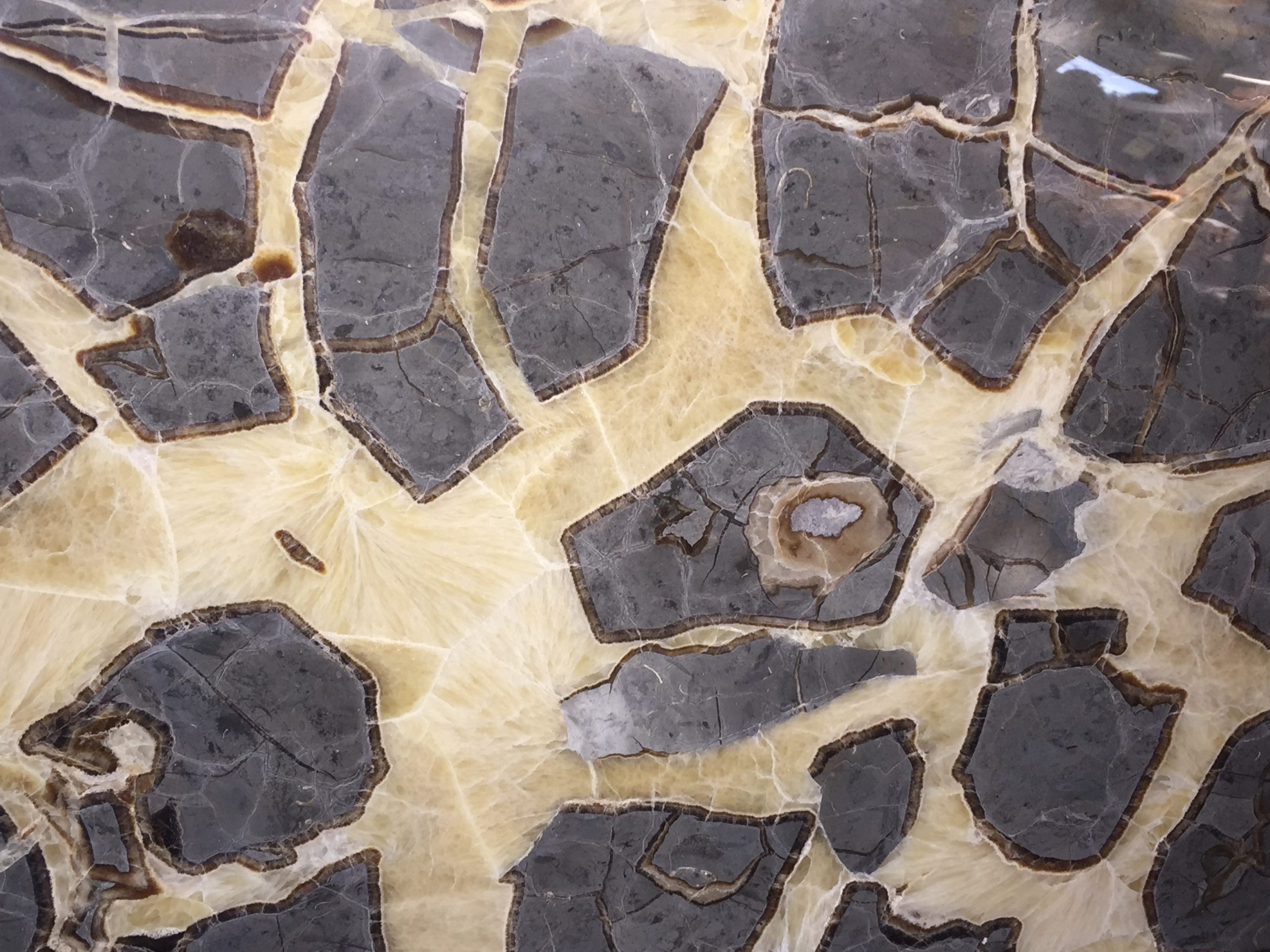 Septarian nodule close up